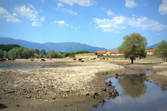 Suchy jezioro w lecie Fotografia Royalty Free