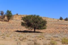 Suchy Kalahari pustyni krajobraz, Kgalagady, Południowa Afryka safari pustkowie Fotografia Stock