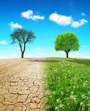 Suchy kraj z krakingową ziemią i łąka z narastającym drzewem obraz stock