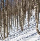 Suchy las w śniegu góra Zdjęcia Stock