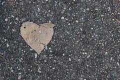 Suchy liść w kształcie serce zdjęcie royalty free