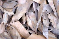 Suchy liść obrazy stock