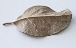 suchy liść Zdjęcie Stock