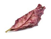 Suchy liść. obraz stock