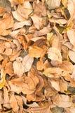 Suchy liść Zdjęcia Stock