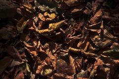 Suchy liść Zdjęcie Royalty Free