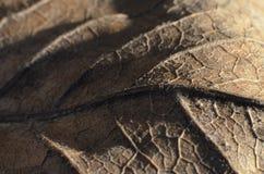 Suchy liść makro- obraz stock