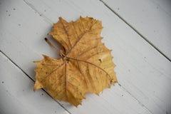 Suchy liść na drewnianej desce zdjęcie stock