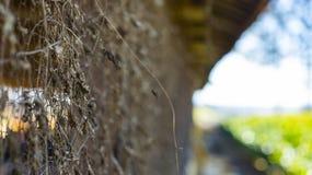 Suchy liść na drucianym ogrodzeniu dla projekta zdjęcie royalty free