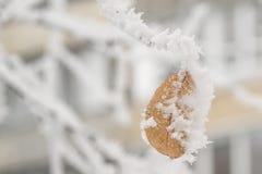 Suchy liść na gałąź w zimie zdjęcie stock