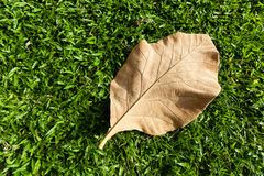 Suchy liść na gazonie zdjęcia royalty free