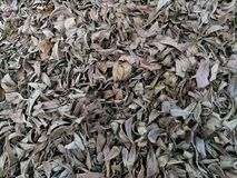 Suchy liść na podłoga Fotografia Royalty Free