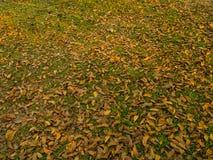 Suchy liść na trawie Zdjęcia Royalty Free
