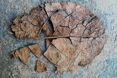 suchy liść pękający Obrazy Stock