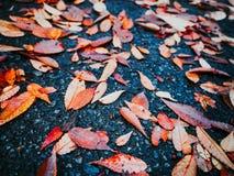 Suchy liść spadać na mokrej podłoga od jesień sezonu przy Japan parkiem Obrazy Royalty Free