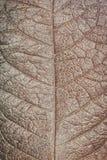Suchy liść tekstury tło Zdjęcia Stock