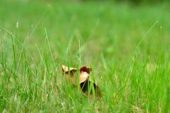 Suchy liść w trawie obraz royalty free
