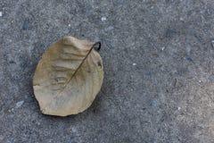 Suchy liść z cementowym tłem zdjęcia stock