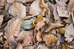 Suchy liścia spadek fotografia stock