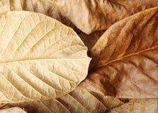 Suchy liścia szczegół Obrazy Royalty Free