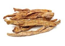 Suchy m?ody bambusowy kr?tkop?d obraz stock