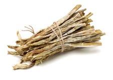 Suchy m?ody bambusowy kr?tkop?d obrazy stock
