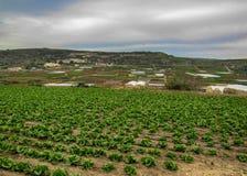 Suchy Maltański wieś widok, Xemxija i Manikata, Malta obrazy stock