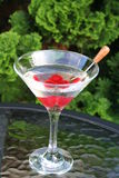 Suchy Martini zdjęcie royalty free
