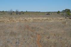 Suchy, mieszkanie krajobraz w Australijskim odludziu zdjęcie stock