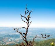 Suchy nieżywy drzewo mech r na gałąź obraz stock