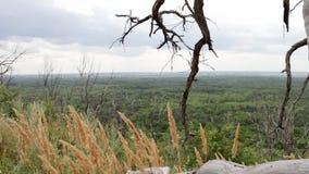 Suchy nieżywy drzewo umierał od braka woda Las znika Krzywy suche gałąź na zboczu Drzewny bagażnik zbiory