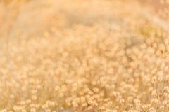 Suchy obszar trawiasty w ranku słońcu Obraz Royalty Free