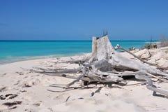 Suchy ogromny fiszorek na tropikalnej plaży piękne wysp brytyjskich wysp raju piasku palm piaskowatych kawałki drzewa w kolorze t Fotografia Royalty Free