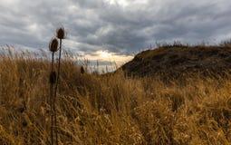 Suchy oset w żółtej trawie i gęstych chmurach Obraz Stock