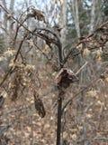 Suchy oset, zakończenie las jesieni Fotografia Stock