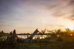 Suchy posusz na trawie z ranku światłem słonecznym w wiejskim Tajlandia Obrazy Royalty Free