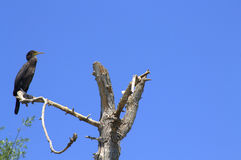 suchy ptaka drzewo Obrazy Stock
