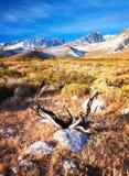 Suchy pustkowie Wschodni sierra Zdjęcie Stock
