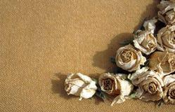 Suchy róż sepia tło Zdjęcia Royalty Free