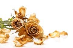 Suchy róża kwiat obrazy royalty free
