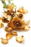 Suchy róża kwiat fotografia royalty free