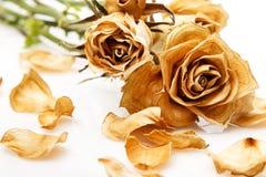 Suchy róża kwiat zdjęcia royalty free