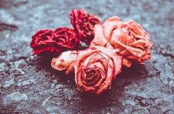 Suchy róża pączek obrazy royalty free