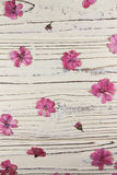 Suchy różowy bodziszek kwitnie na białym tle zdjęcia royalty free