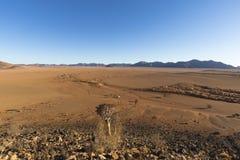 Suchy riverbed w pustyni obrazy stock