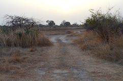 Suchy sawannowy siedlisko w Sahel paska regionie Senegal, Zachodni Afryka obraz royalty free