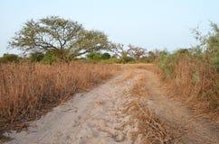 Suchy sawannowy siedlisko w Sahel paska regionie Senegal, Zachodni Afryka fotografia stock