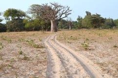 Suchy sawannowy siedlisko w Sahel paska regionie Senegal, Zachodni Afryka zdjęcia stock
