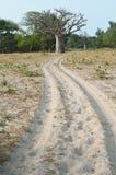 Suchy sawannowy siedlisko w Sahel paska regionie Senegal, Zachodni Afryka zdjęcie stock