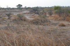 Suchy sawannowy siedlisko w Sahel paska regionie Senegal, Zachodni Afryka obraz stock